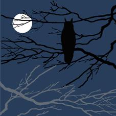 Notturno Gufo_4b
